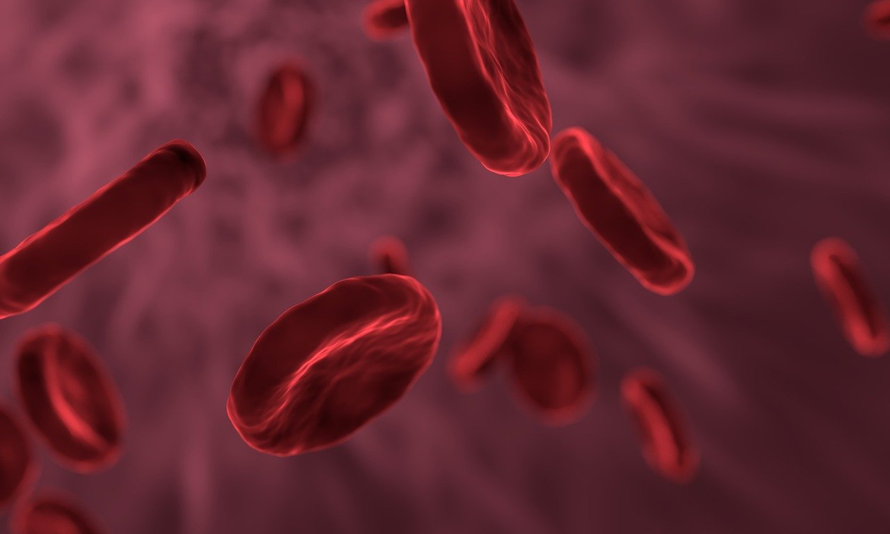 Stammzellen im Blut